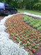 Galeria Trzebnica w kwiatach